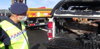 Avcılar kaza yaptı, jandarma ekipleri bagaj kapağını açınca telefona sarıldı